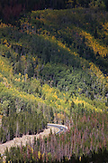 A car drives a winding road through a forest of quaking aspen and pine beetle kill in Rocky Mountain National Park, Colorado.