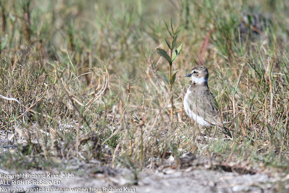 Birding photography from Great Florida Birding Trail, West Section