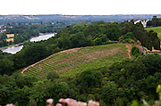 Vineyard. Savennieres, Anjou, Loire, France