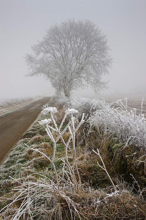 Hoar frost on winter's day  in The Cotswolds, Gloucestershire
