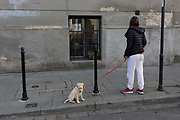 A young woman pauses on the street to wait for her young labrador puppy to carry on its walk through a Krakow suburb, on 23rd September 2019, in Krakow, Malopolska, Poland.