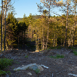 A recentlly logged area on the lower slopes of Black Mountain in Sutton, New Hampshire.  Mount Kearsarge is in the distance.