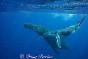 humpback whale, Megaptera novaeangliae, and calf, Vava'u, Kingdom of Tonga, South Pacific; both mother and baby have commensal remoras, or shark suckers attached to underside
