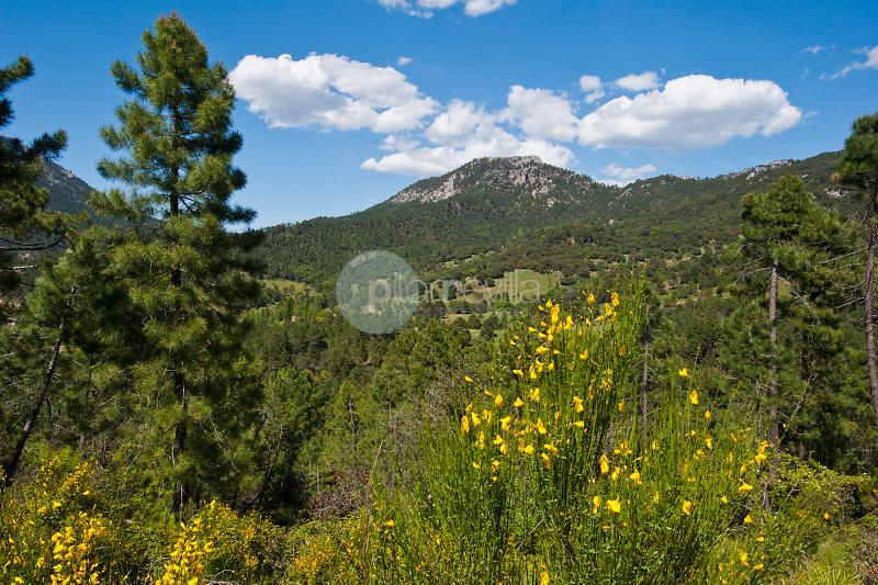 Parque Natural de los Calares del Mundo y de la Sima. Sierra del Segura. Riopar. Albacete ©Antonio Real Hurtado / PILAR REVILLA