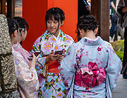 """Young women in kimonos check their smartphones in Kyoto, Japan. Fushimi Inari Taisha is an important Shinto shrine in southern Kyoto, Japan. Bright vermilion Senbon Torii (""""thousands of torii gates"""") straddle a network of trails behind its main buildings. The trails lead into the wooded forest of the sacred Mount Inari (233 meters). Fushimi Inari is the most important of several thousands of shrines dedicated to Inari, the Shinto god of rice. Foxes are thought to be Inari's messengers, honored in many statues. The shrine predates the capital's move to Kyoto in 794. The torii gates are donated by individuals and companies, as inscribed on the back of each gate. Prices for small to large gates run from 400,000 to over one million yen."""