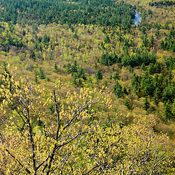 View of the Swift River Valley from the Boulder Loop Trail in New Hampshire's White Mountain National Forest. Near Kancamagus Highway.