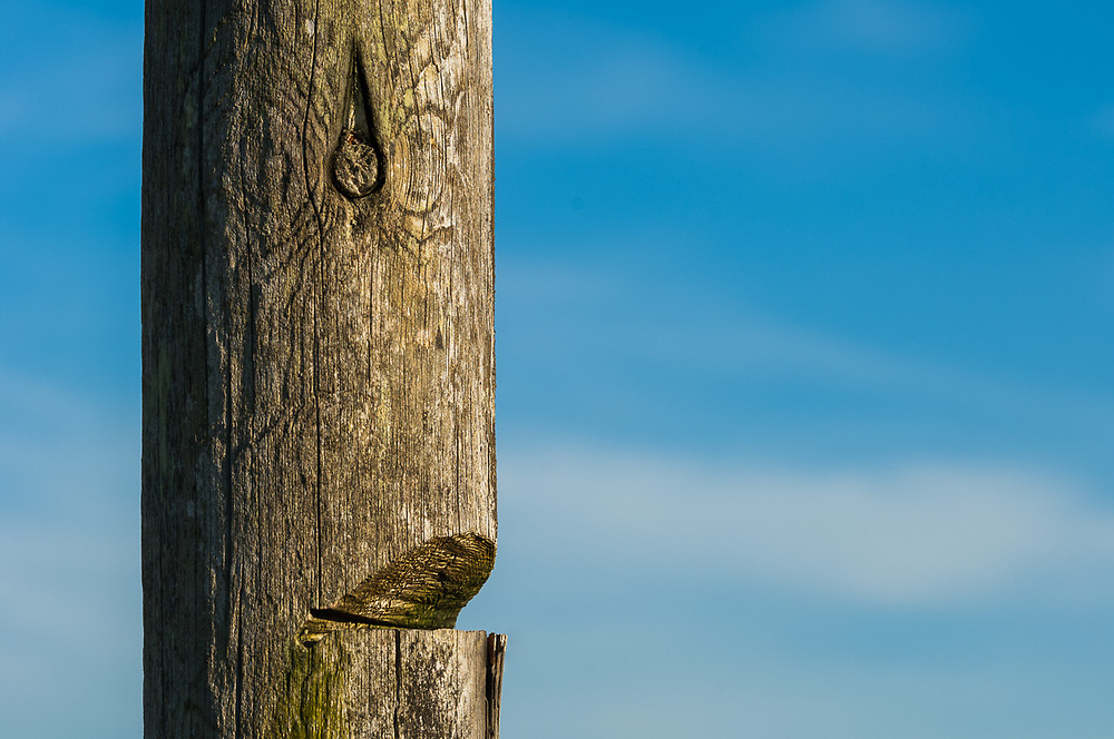 Fence post, afternoon light, April, Mima Mounds Natural Area Preserve and National Natural Landmark,Thurston County, Washington, USA