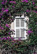 Bougainvillea vine frames shuttered window, Saint Tropez, France