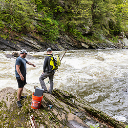 Scientists from the Gulf of Maine Research Institute prepare to catch Alewives during their spring spawning run on the Presumpscot River in Portland, Maine.