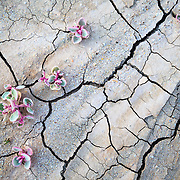 Spring flowers bloom momentarily in the desert near Page, Arizona.