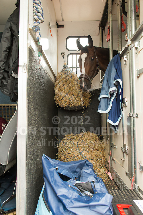 Italian team horse Apollo waits his turn - Olympic Horse Flights - Stansted Airport, Essex, United Kingdom - 29 July 2016