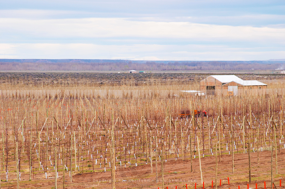 Vineyard in winter. Bodega Valle Perdido (previously Arquen) Winery, Neuquen, Patagonia, Argentina, South America