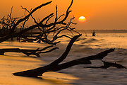 Sunrise over Boneyard Beach at Botany Bay Plantation July 11, 2014 in Edisto Island, South Carolina. Each year 144,000 cubic yards of sand is washed away with the waves at the beach and nearshore eroding the coastal forest along the beachfront.