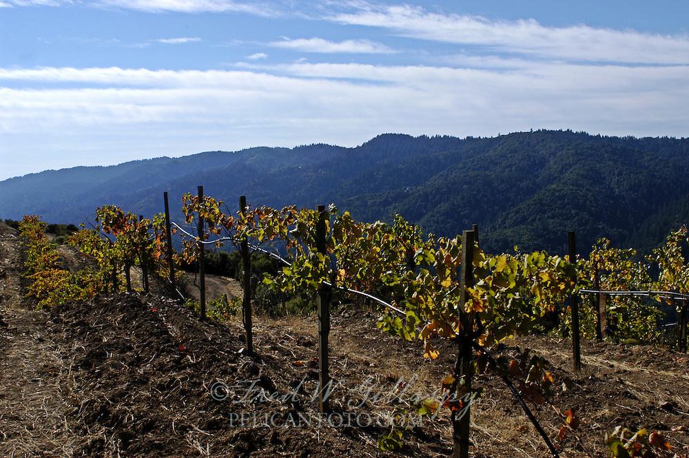 Santa Cruz Mountains - Montebello Ridge - Fellom Ranch