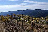Vines ~ Santa Cruz Mountains AVA