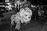"""14 MARCH 2014 - NAKHON CHAI SI, NAKHON PATHOM, THAILAND: Lion dancers perform at the opening of the tattoo festival at Wat Bang Phra. Wat Bang Phra is the best known """"Sak Yant"""" tattoo temple in Thailand. It's located in Nakhon Pathom province, about 40 miles from Bangkok. The tattoos are given with hollow stainless steel needles and are thought to possess magical powers of protection. The tattoos, which are given by Buddhist monks, are popular with soldiers, policeman and gangsters, people who generally live in harm's way. The tattoo must be activated to remain powerful and the annual Wai Khru Ceremony (tattoo festival) at the temple draws thousands of devotees who come to the temple to activate or renew the tattoos. People go into trance like states and then assume the personality of their tattoo, so people with tiger tattoos assume the personality of a tiger, people with monkey tattoos take on the personality of a monkey and so on. In recent years the tattoo festival has become popular with tourists who make the trip to Nakorn Pathom province to see a side of """"exotic"""" Thailand.   PHOTO BY JACK KURTZ"""