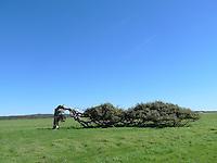 tree bowed by wind
