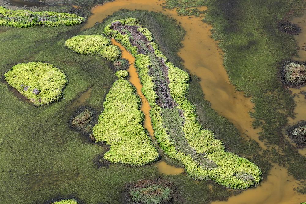 Wetland <br /> East GUYANA<br /> South America