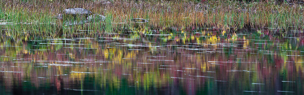 autumn color reflections in a pond in the Indian Heaven Wilderness - Gifford Pinchot National Forest, Washington state, USA