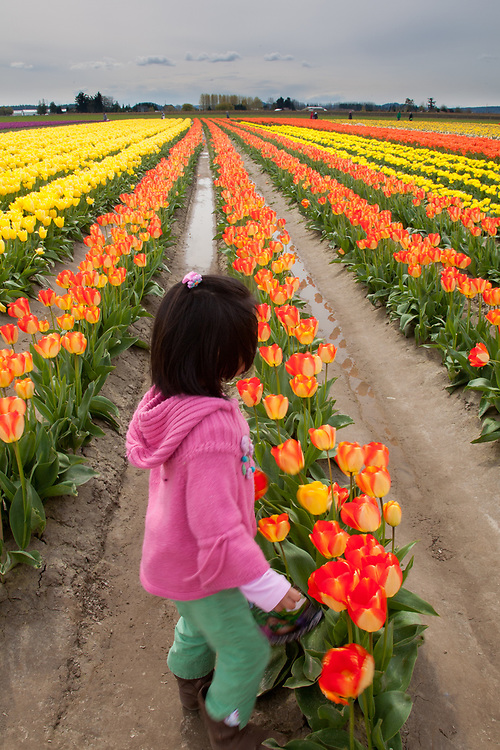North America, United States, Washington, La Conner, girl and tulips in bloom at annual Skagit Valley Tulip Festival, held in April