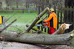 © Licensed to London News Pictures. 12/03/2019. London, UK. Staff from Haringey Council's park services cutting the tree to clear the road.<br /> A tree has fallen on Green Lanes in Haringey, North London due to strong winds. Green Lanes is closed between Manor House underground station and Endymion Road. Met Office is warning to prepare for rain and 80mph gales as Storm Gareth hits later today bringing the risk of heavy flooding. Photo credit: Dinendra Haria/LNP