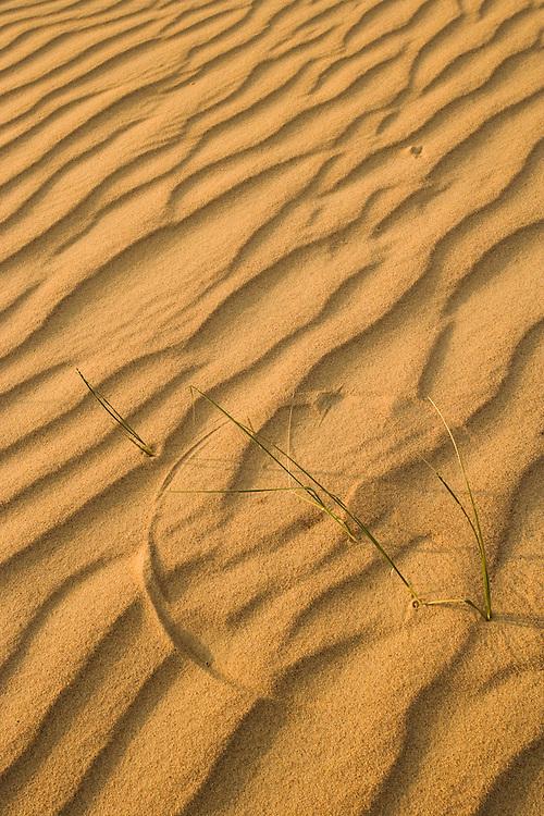 Sand patterns & marram grass on Agilos Kopa, Nagliai Nature Reserve, Curonian Spit, Lithuania. Lithuania. Mission: Curonian Spit, Lithuania, June 2009.