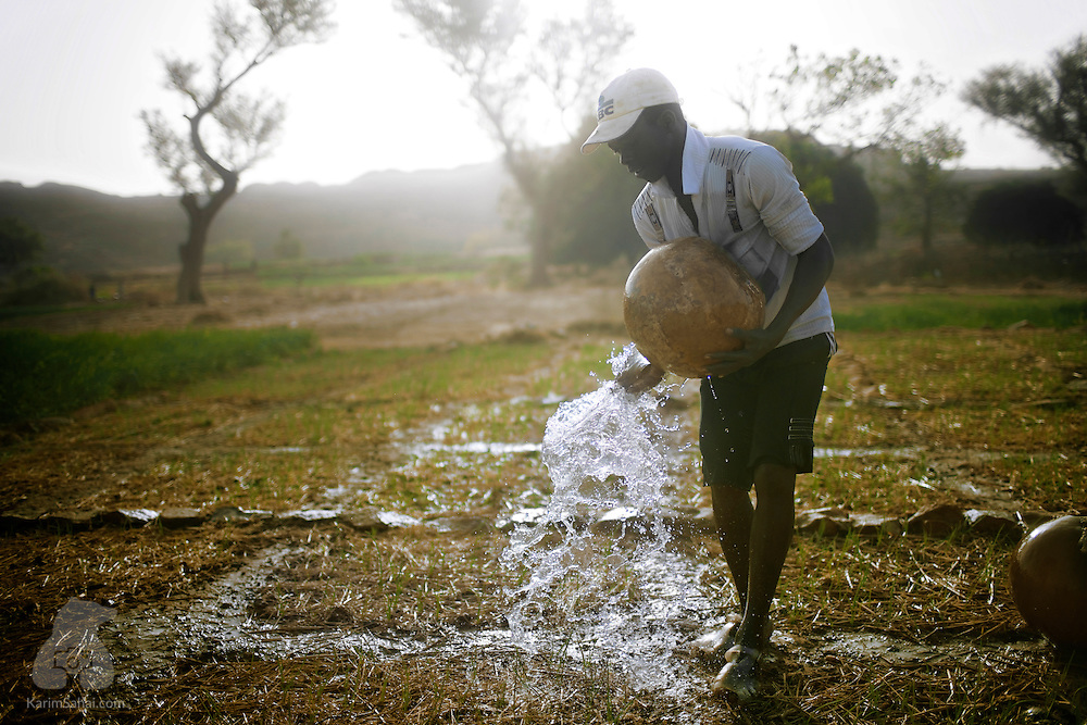 A young man irrigates an onion field with water from a calabash, Dioundourou, Dogon Country, Mali.