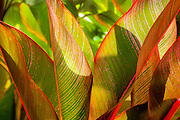 Tropical leaves in a colorful design