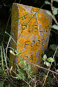 A detail of a public footpath marker in undergrowth, on 7th July 2019, near Doddington, England