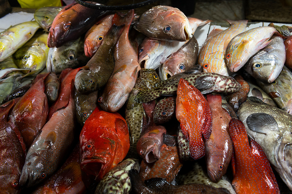 A variety of fish for sale at the market in Puerto Princesa, Palawan, Philippines