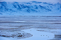 Mongolie, province de Bayan-Olgii, paysage en hiver, troupeau de yaks // Mongolia, Bayan-Olgii province, landscape in winter, herd of yaks