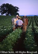Farms, agriculture