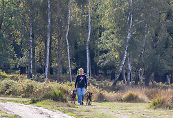 © Licensed to London News Pictures. 05/10/2020. London, UK. Dog walkers enjoy the mild temperatures and autumnal colours in Richmond Park today after Storm Alex lashed the UK with 3 days of rain. Weather forecasters predict sunshine and showers with a high of 16c for the rest of the week. Photo credit: Alex Lentati/LNP