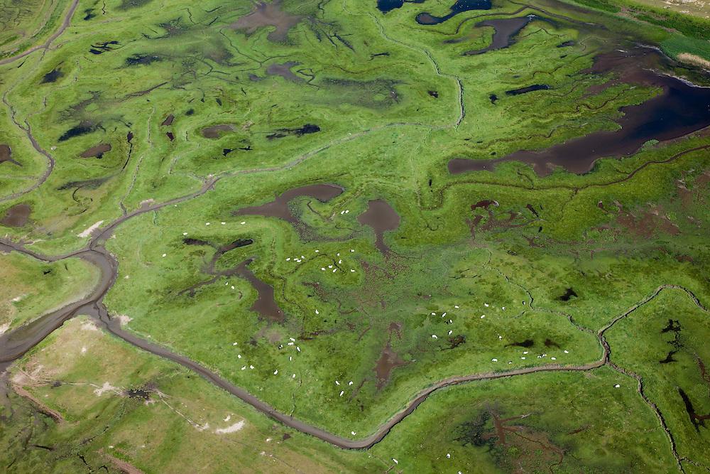 Nederland, Zeeland, Zeeuws-Vlaanderen, 12-06-2009; geulen, slikken en schorren in het Verdronken Land van Saeftinghe, getijdengebied in het oosten Zeeuws-Vlaanderen op de grens met Belgie en onderdeel van het estuarium van de Schelde. De witte stippen zijn schapen. De voormalige polder is het grootste brakwatergebied van Europa en staat onder invloed van het getij. Het Verdronken Land is een natuurreservaat, in beheer bij het Zeeuws Landschap en belangrijk als broed-, overwinterings- en rustgebied voor vogels. Niet vrij toegankelijk. .The Drowned Land of Saeftinghe, tidal area in the east of Dutch Flanders on the border with Belgium. The former polder is the largest brackish water of Europe and because of the the tides, there are mud flats and gullies. The Drowned Land is a nature reserve, not freely accessible. It is managed by the Zeeuws Landscape and important as bird sanctuary, part of the Scheldt estuary.Swart collectie, luchtfoto (25 procent toeslag); Swart Collection, aerial photo (additional fee required).foto Siebe Swart / photo Siebe Swart