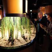 The Secret Lives of Seahorses exhibit at the Monterey Bay Aquarium, which is located on Cannery Row in Monterey, California, on Friday July 13, 2012.(AP Photo/Alex Menendez)