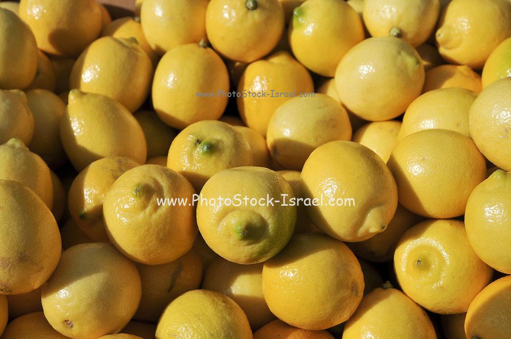 A pile of fresh lemons