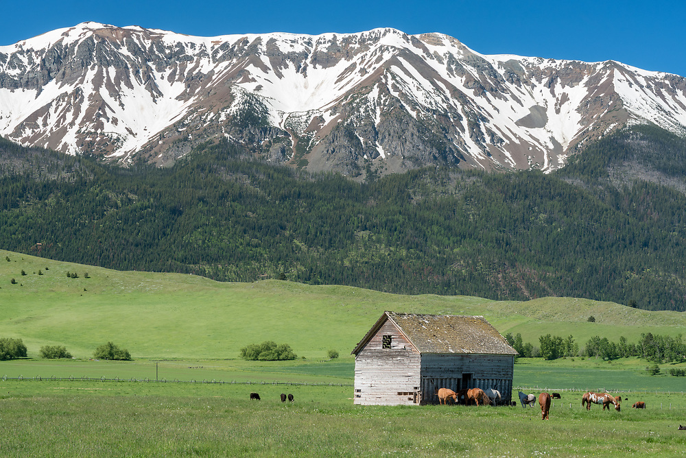 Horses near an old barn in Oregon's Wallowa Valley.