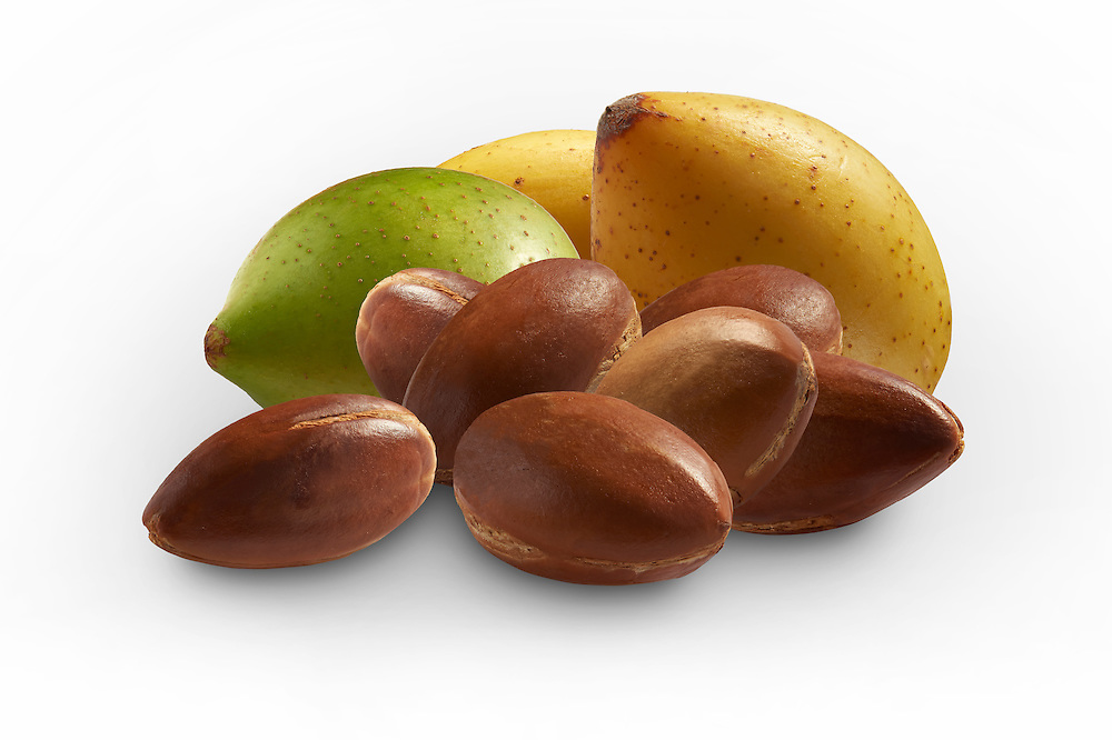 Fresh Argan nuts with outer skins and Argan nuts in their shells against a white background .<br /> <br /> Visit our MOROCCO HISTORIC PLACES PHOTO COLLECTIONS for more   photos  to download or buy as prints https://funkystock.photoshelter.com/gallery-collection/Morocco-Pictures-Photos-and-Images/C0000ds6t1_cvhPo
