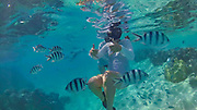 Snorkeling, Aitutaki, Cook Islands, South Pacific