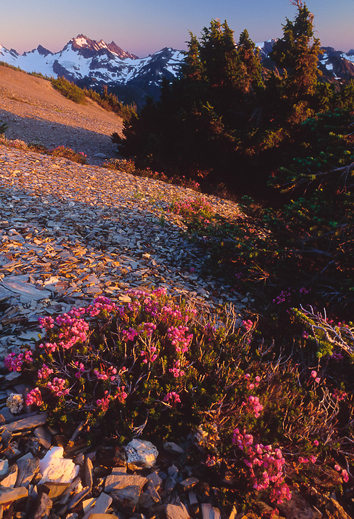 View from Sentinel Peak, Mount Anderson and pink heather, evening light, July, Olympic Natinal Park, Washington, USA
