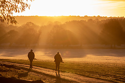 © Licensed to London News Pictures. 20/11/2020. London, UK. Walkers in Richmond Park, South West London enjoy a frosty sunrise over the hills and trees as temperatures dropped bellow -1c last night for the South East of England. However, the weekend will become milder with some rain and light winds. Photo credit: Alex Lentati/LNP