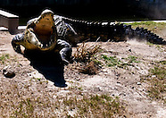 Australia Crocodiles