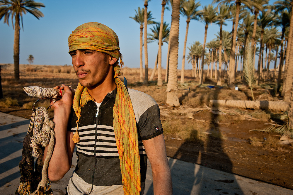 A date tree harvester with his tree-climbing equipment in Ramadi.