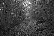Footpath leading to Druids Grove. Norbury Park, Surrey, UK.