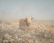 A dump on the edge of Ulan Bator. Plastic is burning and animal skeletons are left to dry.