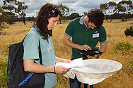 Marissa Bailey and Daniel Watts, Field Surveillance Officers at the Mildura Locust Incident Control Centre in Northern Victoria, Australia collecting and recording samples of Australian Plague Locusts in the Murray Pine South Bushland Reserve.  The Victorian government has pledged $43.5million in support to help combat what could be the worst locust plague in over 75 years in South Eastern Australia with potential imapcts on agriculture of over $2 billion.