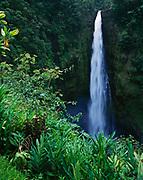 Akaka Falls plunging some 420 feet, Akaka Falls State Park, Big Island of Hawaii.