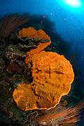Bright orange sponge and seascape with sunburst, Kimbe bay