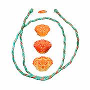 Green Crab (Carcinas maenas) and copolymer fishing rope.