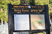 Biriya forest, Israel